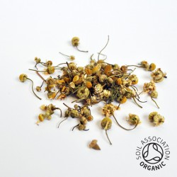 Canton Tea Chamomile