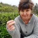 Canton Tea Jasmine Silver Needle