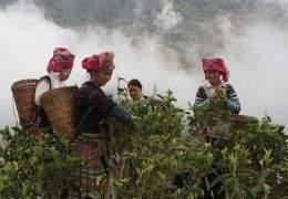 Zes tips voor perfecte groene thee